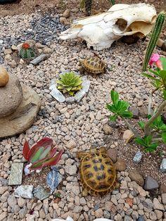 Terrario para tortugas de tierra con familia de tortugas rusas Russian Tortoise Care, Tortoises, Turtles, Pets, Outdoor Decor, Animals, Russian Tortoise, Turtle Terrarium, Terrariums