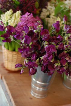 Purple Sweet Peas...a much better picture of it's color...more egg plant than burgundy.