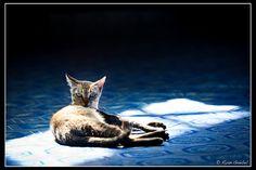 cat (by Ryan Goebel)