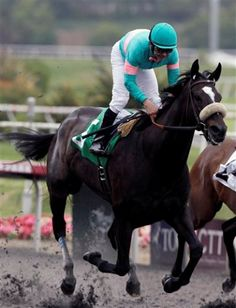 Zenyatta! I'll never forget watching her run in the Breeder's Cup for the last time. We stood right at the finish line, such a beautiful mare!