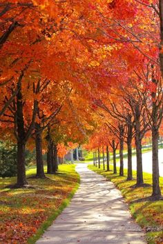 Nature Landscape Photography : Wall Decor - Autumn Path - Odenton, Maryland This is our regular walking path in our neighborhood. When the afternoon sunlight shines through these trees in late afternoon, the leaves glow a bright orange like fire. Landscape Photography Tips, Nature Photography, Travel Photography, Photography Business, Photography Beach, Photography Classes, Photography Backgrounds, Photography Jobs, Photography Magazine
