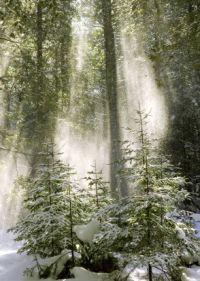 Inspirations & Miracles ~ See my story at Havewood Tales (click the link)