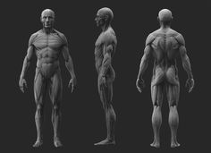 ArtStation - Anatomy Study, Joe Zheng