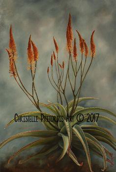 Artist: Christelle Pretorius. Beautiful composition of South African Aloes. Oil on Canvas. Subjected to copyright. For more information contact Christelle christelledv@live.com Oil On Canvas, Composition, My Arts, African, Live, My Love, Artist, Plants, Beautiful