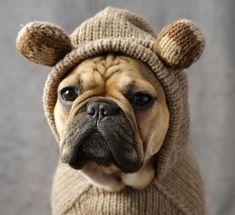 Frenchie Honey Bear, I want one.