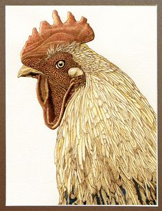 """Rooster Stare"" burned on paper with watercolor accents."