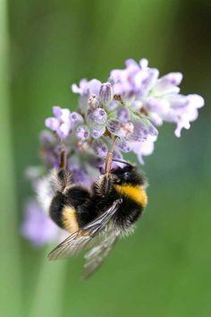 ~ Bumble Bee ~