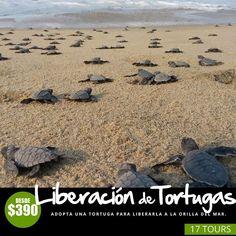 Tours, Shape, Sunsets, Turtles, Beaches, Oaxaca, Earth