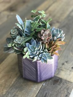 🌵 Inspired by Nature! Succulents In Containers, Succulent Arrangements, Container Gardening, Planting Flowers, Flora, Planters, Christmas Decorations, Gardens, Purple