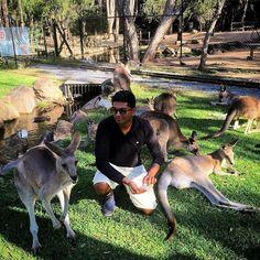Rooos. #kangaroos #Australia #queensland #QLD #currumbin #currumbinwildlifesanctuary #animals #zoo #feeding #straya #oz by karpatri http://ift.tt/1X9mXhV