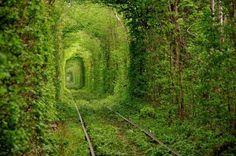 Grote bomen omringen deze oude treintunnel in Kleven, Ukraine. Deze magische plek heeft de naam 'The Tunnel of Love' gekregen omdat het een populaire plek is voor toeristische koppels.