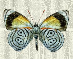butterfly - pastel blue - printed on page from vintage dictionary