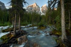 Earth Stream  Earth Rock Forest Mountain Canada Banff National Park Wallpaper
