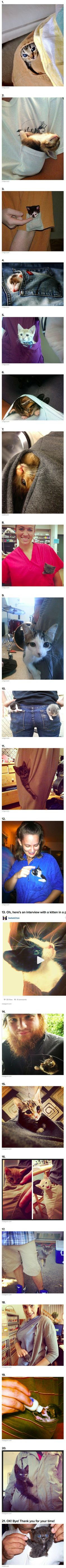 Another day, another batch of cat pictures that have gone viral online. This time, we're dealing with pocket cats, or in other words, tiny kittens that have found their way into shirt / pant pockets.