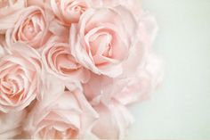 Pale blush roses. If you could smell these, I bet they'd be so sweet