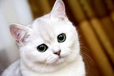 Cat - (#107323) - High Quality and Resolution Wallpapers on hqWallbase.com