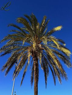 #palm