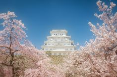 White Castle on Sakura