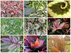 Who Needs Flowers - Plants that Dazzle with Their Colorful Foliage