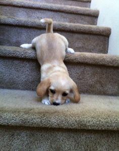 I finally reached the next stair now how to get down...