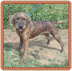 Act quickly to adopt BUBBA - see also BO. Pets at this Shelter may be held for only a short time.Mix. Meet BUBBA - see also BO a Dog for Adoption.