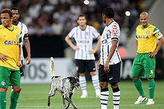 Dog days are not over... #Corinthians Crédito: Friedemann Vogel/Getty Images