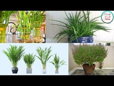 10 Plants You Should Have In Your Bedroom For A Better Sleep (These Are Emitting Oxygen During Night - YouTube