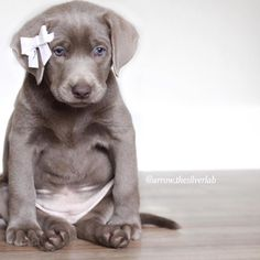 Instagram Silver Lab