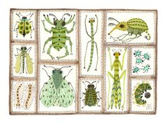 Beetles Weevils Flies No. 15 original watercolor by GollyBard