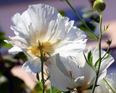 Flowers from Botanical park of Brissago Islands  by Bibi015, via Flickr