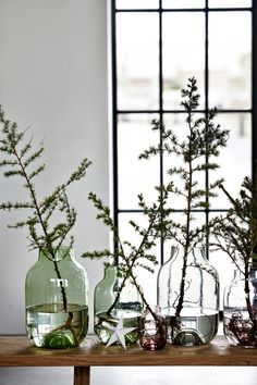Winter branches in glass jugs