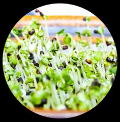 sprouting with benefits, my guide to your personal windowsill sprouting garden with a budget frindly easy DIY sprouting jar - langsamfood Cool Diy, Easy Diy, Broccoli, Sprouts, Benefit, Cabbage, Budget, Jar, Dishes