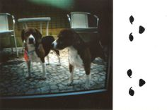 beables + ilustra + Lomography  Máquina: Diana Mini | filme: lomography ISO...