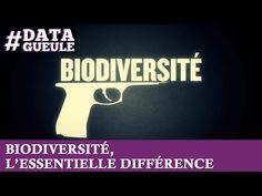 ▶ Biodiversité, l'essentielle différence #DATAGUEULE 24 - YouTube