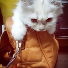This is my way traveling around. How's your holiday buddy? Hope you all have a great trip just like I did.  # #missygirl #catslovercatsoftheday #catsofinstagram #catstagram #instacat #catslovers #catsdiary #diarykucing