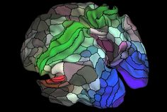 New map of brain's surface unites structure, function | Spectrum
