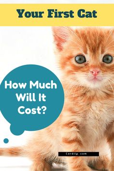 Find out the costs involved before adopting your cat
