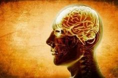 Stress, Brain Wiring, Empathy and Morality