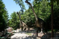 Bratislava ZOO is one of the largest ZOOs in Slovakia. If you have some spare time, want to spend a relaxed day somewhere nice or just love animals, then th Zoos, Bratislava, Hammock, Outdoor Decor, Plants, Animals, Animales, Animaux, The Zoo