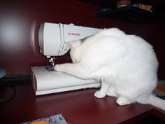 cat and sewing machine