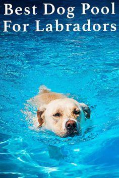 Best Dog Pool For Labradors and Other Large Breeds Dog Friendly Backyard, Indoor Dog Park, Dog Swimming Pools, Dog Pond, Dog Facts, Outdoor Dog, Outdoor Ideas, Outdoor Spaces, Large Dog Breeds