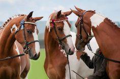(82) Simply Horses
