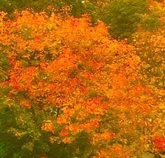 🍁Hösten är vacker!🍁  #höst #lönnlöv #autumn #fall #bucketlist #fallharvest #hallmarkchannel