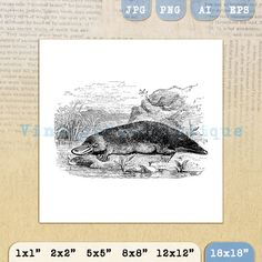 Digital Platypus Graphic Printable Antique by VintageRetroAntique
