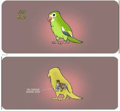 Describes my birds perfectly. [source in comments] - Imgur