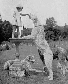 Irish Wolfhound, tallest giant dog of the canine world =) Really Big Dogs, I Love Dogs, My Bebe, Big Animals, Foto Art, Dog Photos, Large Dogs, Animals Beautiful, Pug Dogs