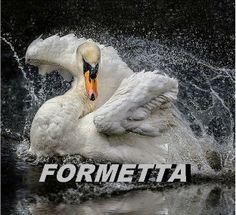 Di Di Di Murgula Di-  http://www.youtube.com/watch?v=4cRryqZlWL4