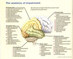 Brain Anatomy And Function | Shame is feeling poorly about self, not the actions. The result is an ...