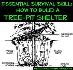 tree-pit shelter
