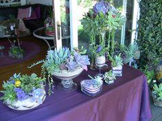 Succulent Centerpieces - Succulent Wedding Bouquets &Accessories